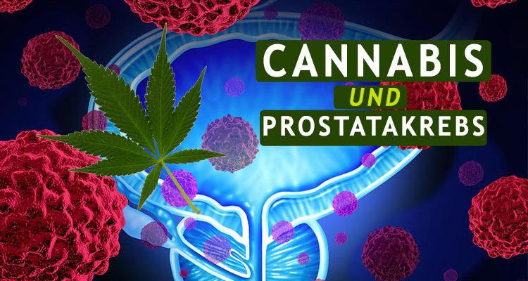 cannabis und Prostatakrebs