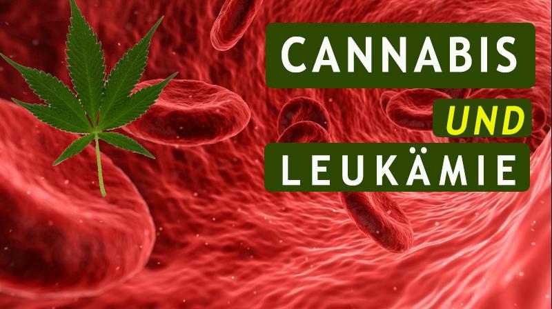 Medizinisches Cannabis und die Behandlung von Leukämie