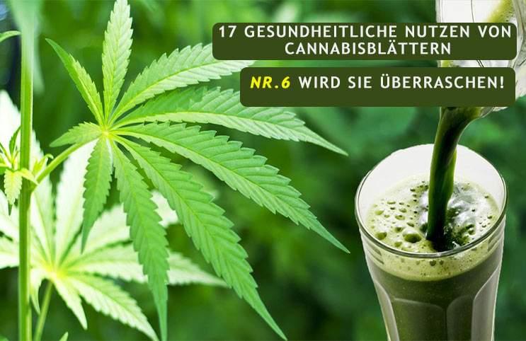 17 gesundheitliche Nutzen von Cannabisblättern (Nr. 6 wird Sie überraschen)